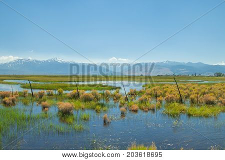 beautiful spring landscape of a watery meadow with snowy mountains in the background