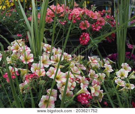 Gardening beauty of nature blooming beautiful delicate flowers