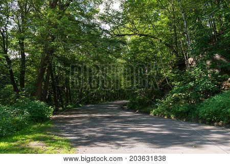 Tree lined road on Mount Royal Montreal Quebec Canada