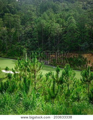 Forest Scenery In Dalat, Vietnam