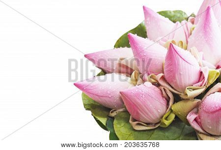 Close up pink lotus flower bouquet with leaf Thai culture style isolated on white background