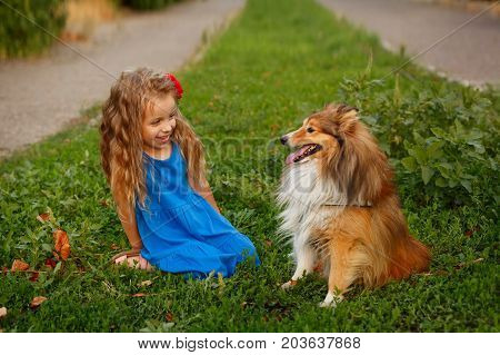 Cute little girl with a dog Sheltie breed. Best friends forever. Dog devotion. A girl and a pet in the park. They look at each other