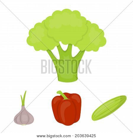 Red sweet pepper, green cucumber, garlic, cabbage. Vegetables set collection icons in cartoon style vector symbol stock illustration .