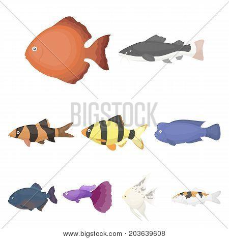 Aquarium fish set icons in cartoon style. Big collection of aquarium fish vector symbol stock