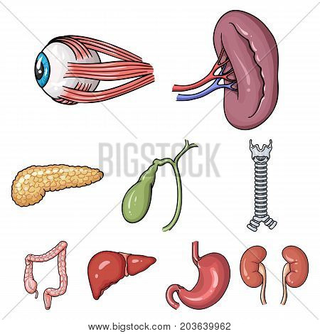 Human organs set icons in cartoon design. Big collection of human organs vector symbol stock illustration