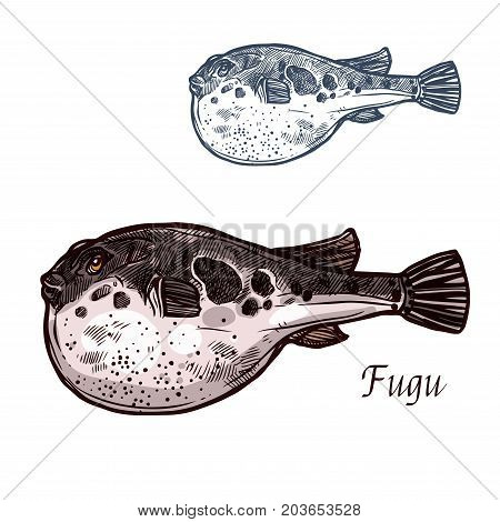 Fugu fish isolated sketch of japanese pufferfish. Sea animal, poisonous fugu fish with puffed stomach vector icon for japanese seafood cuisine, fish market and restaurant menu design