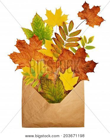 Opened craft paper envelope full of dry autumn leaves isolated on white background