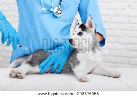 Cropped shot of a cute little Siberian husky puppy getting vaccinated by a professional veterinarian health care pet animals occupation concept.