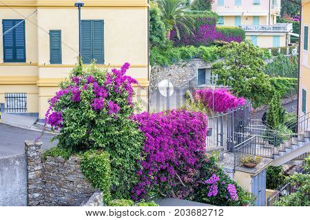 Daylight view to purple flowers and city road in Santa Margherita Ligure, Italy.