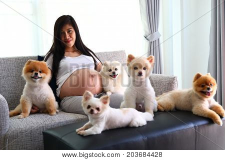 woman pregnant 9 month and pomeranian dog cute pets sitting on sofa furniture in living room image of family love home concept