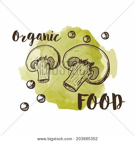 Hand drawn sketch style champignon mushroom composition set. Slice cuts. Vector farm fresh food collection on a watercolor background, text organic food