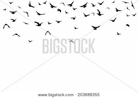 Flying birds. Decoration element from scattered silhouettes. Top border.