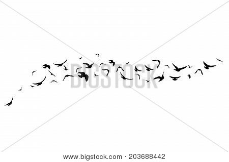 Flying birds. Decoration element from scattered silhouettes. Horizontal divider
