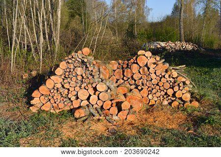 Cut fresh firewood stack near forest in farmland