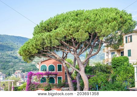 Beautiful daylight view to green tree, rose house and city of Santa Margherita Ligure, Italy