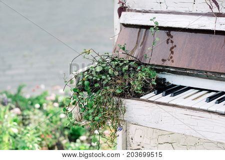 old white piano using as a flower bed in a park