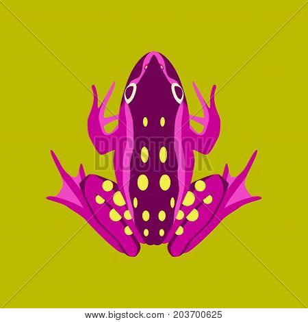 Vector illustration in flat style toad wildlife
