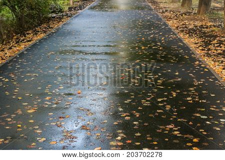 Receding into the distance wet asphalted walkway covered with falled autumn leaves.