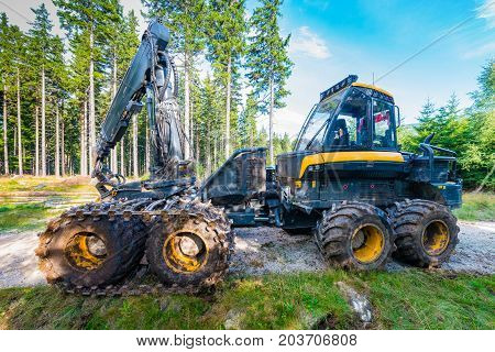 Forest cutting. Timber harvester. Forest cutting with the help of a harvester.