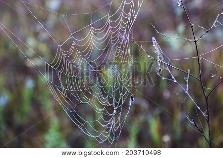 spiderweb in drops of morning dew on the natural blurred background. autumn etude