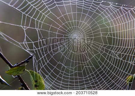 close-up concentric spiderweb in drops of morning dew on the natural blurred background. autumn came
