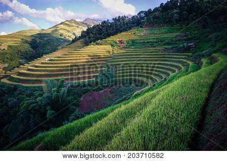 Terraced Rice Field In Northern, Vietnam