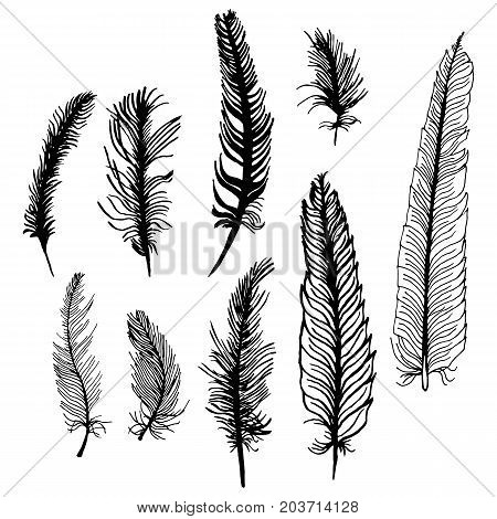 Set of hand drawn bird feathers isolated on white background. Boho decoration allegory black pen bird sign. abstract decoration Graphic drawing arrow line symbol element.