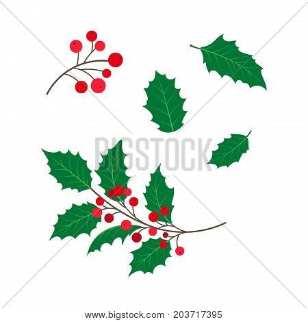 vector flat cartoon style holly tree, mistletoe or ilex branch, leaves and berries set. Isolated illustration on a white background. Christmas cards, banners of presentation decoration design symbol