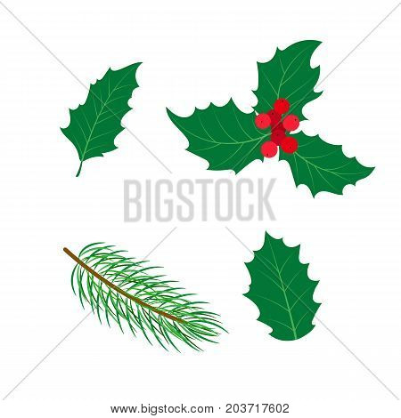 vector flat holly tree, mistletoe or ilex branch, leaves and berries and spruce branch set. Isolated illustration on a white background. Christmas natural green colored floral decoration design symbol