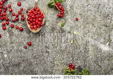 Fresh northern cranberries on a gray stone background in a vintage cupronickel spoon with twigs and leaves. Top View