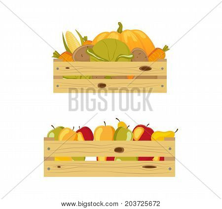 Two wooden storage boxes - one packed with apples, another containing autumn vegetables, cartoon vector illustration isolated on white background. Apples and autumn vegetables in wooden storage boxes