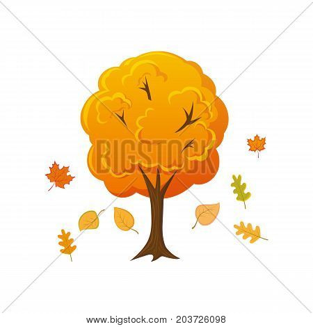 Cartoon style autumn tree with leaves falling down, vector illustration isolated on white background. Cartoon fall, autumn forest, garden, park tree with leaves falling down, decoration element