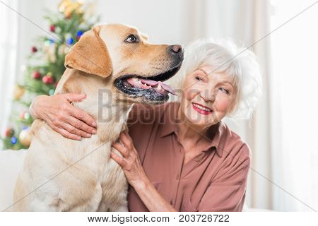 Favorite pet. Selective focus of nice big dog is sitting with Christmas tree on background while being hugged by old cheerful lady. Woman is looking at animal with smile