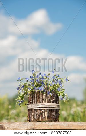 A bouquet of beautiful blue small flowers called forget-me-nots in a homemade vase made of wooden branches on a table in the summer