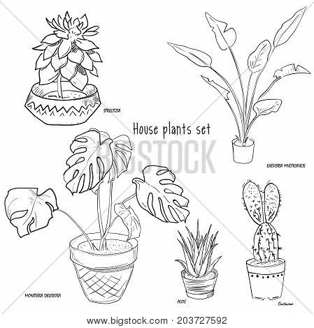 Houseplants vector set of hand drawing. Vector illustration, EPS 10