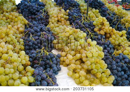White Muscat Grape And Dark Grape - Sweet And Tasty Dessert, Healthy Fruit From South Vineyards Of P