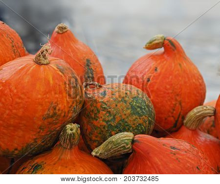 Close Up Whole Orange Hokaido Pumpkins With Light Gray Blurred Background