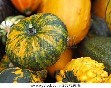 Close Up Green Red Orange And Yellow Decorative Hokkaido Pumpkins Natural Background