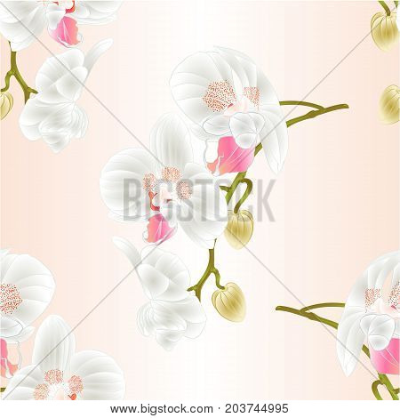 Seamless texture beautiful Orchid Phalaenopsis stem with white flowers and buds closeup vintage vector editable illustration hand draw