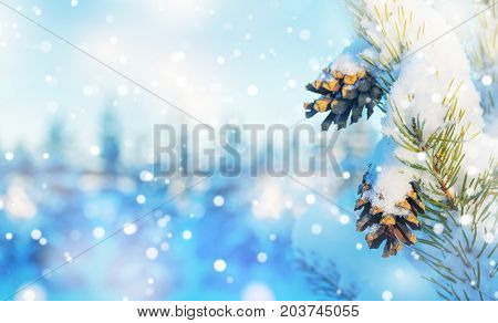 Christmas background. Winter background with snow-covered pine branches with cones