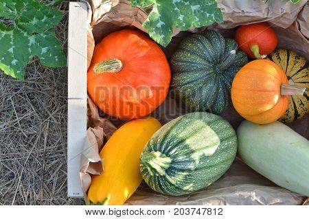 Pumpkins And Squashes Harvest Box