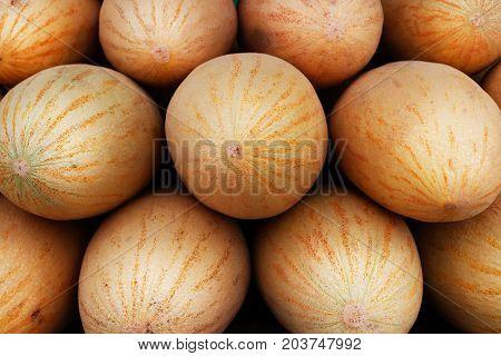 Melon Row. Few Juicy Melon Rows. Fruits Sale. Berries Trading