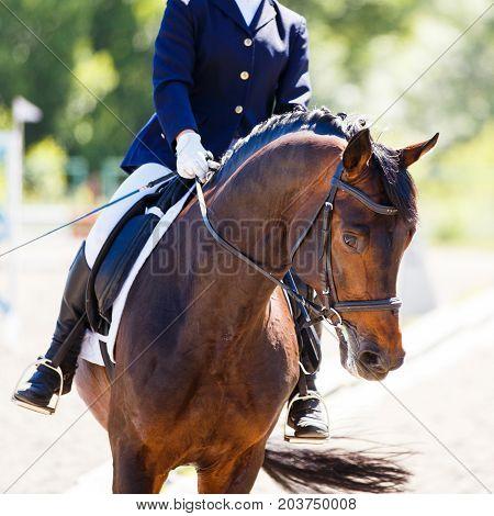 Bay horse with rider horseback on dressage arena. Equestrian sport background