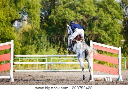 Young rider man on grey horse jumping over hurdle on show jumping competition. Rear view with copy space poster