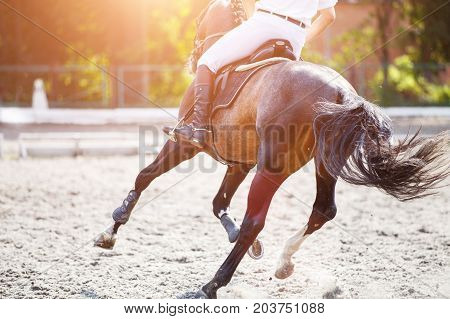 Bay horse with rider galloping on show jumping competition. Equestrian sport background