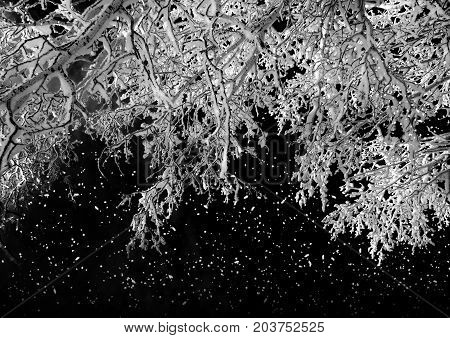 Winter Nature, Night Forest