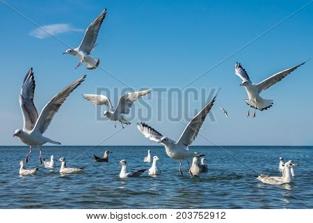 Seagulls fighting for bread pieces being thrown into the sea