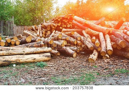 High Quality Pine Logs. Pile Of Wood Logs Ready For Winter
