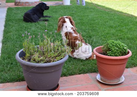 Charming Dogs In A Backyard