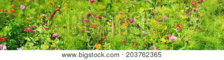 Greeting card flowers summer flowers background Panorama